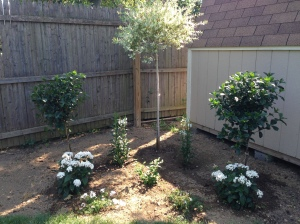 ....and our white garden we just started working on. Our embryo photographs are buried front and center.